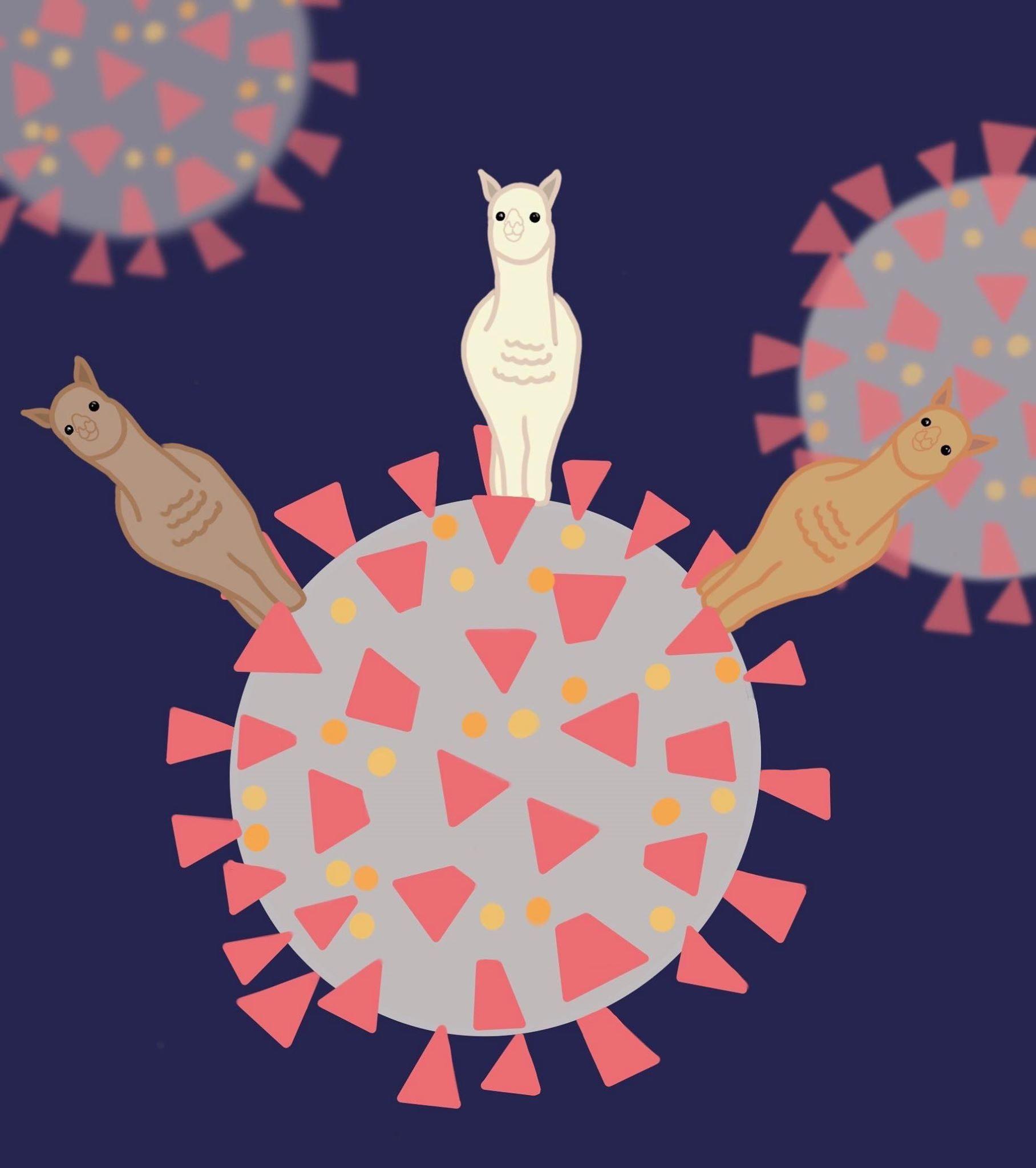 06/08 News Flash 4: Alpacas, Antibodies, and Antivirals