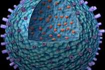 Scientists Receive Grant to Advance Nanotherapy for Lupus
