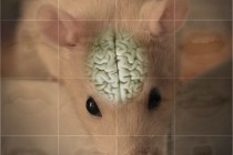 Memory and Emotion: What Rats can Teach Us