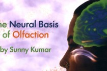 The Neural Basis of Olfaction