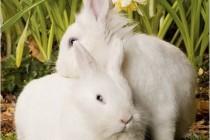 Do Animals Exhibit Homosexuality?