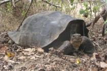 Yale Attempts to Resurrect Extinct Tortoise Species