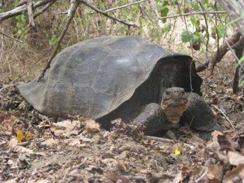 news-tortoise-2EDITED