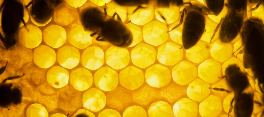A Not so Sweet Discovery: Pesticides Damage Bee Brains
