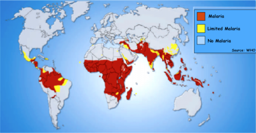 In the African continent, Northern Africa and Southern Africa have very low malaria incidence rates. In Northern Africa, this is due to the immunity conferred by the sickle cell gene. In Southern Africa, Dr. Bucala has postulated that malarial immunity is provided by the low expressing variant of the MIF gene. Courtesy of WHO.