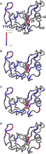 Millisecond motion in the enzyme RNase A with amino acids for MES, phosphate, sulfate, and acetate buffers. Amino acid residues with Rex ranging from zero (gray) to 40/s (red, see color bar) are shown on a ribbon diagram of RNase A for MES reference (A), phosphate (B), sulfate (C), and acetate (D). Courtesy of Patrick Loria.