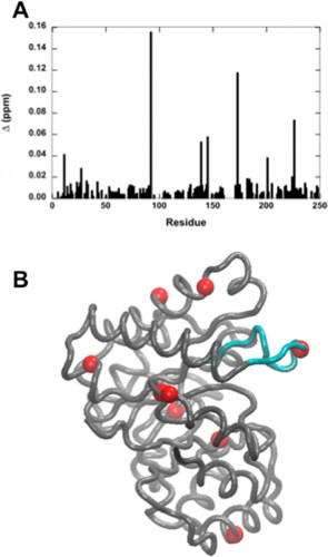 Buffer-altered chemical shifts in TIM - (TIM.jpeg): (A) Chemical shifts and millisecond motion in the enzyme TIM using phosphate as a buffer. Values of Δ > 0.02 ppm are shown as red spheres on the TIM monomer. The active site loop 6 is colored in cyan. Courtesy of Patrick Loria.