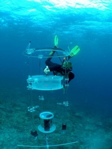 The o-DISC was used to help gather data about the swimming activity and bearing relative to their home reef of larvae. Courtesy of Michael Kinsgford.