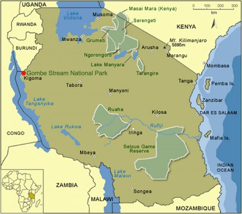 Gombe Stream National Park, located in western Tanzania, is home to the only wild-living primate population naturally infected by SIVcpz. Photo courtesy of The Jane Goodall Institute.