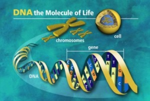 DNA carries the essence of life in the form of genes. Photo courtesy of www.all-about-forensic-science.com.
