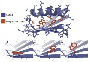 Wilson's research group designs new enzymes by manipulating the shape of the protein scaffold and the functional side chains that are attached. Image courtesy of Biotechniques.com.