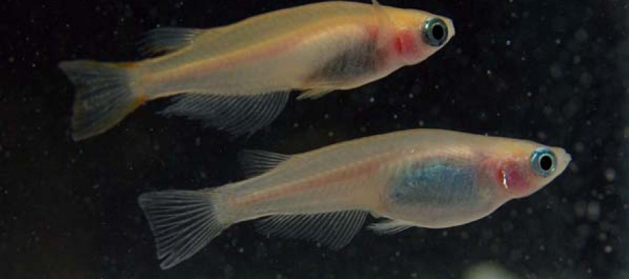 Love at Second Sight: Sociality and Mating Behavior in Fish