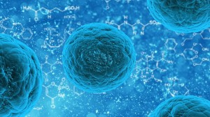 Nanoparticles can affect and target individual cells for drug delivery. Here is an example of a stem cell that could be differentiated in a particular way by means of nanoparticle therapy.