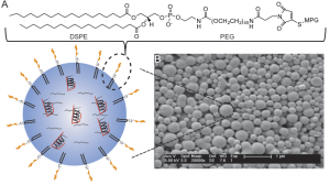 The nanoparticle is designed by the synthesis two biodegradable polymers and decoration a specific signal peptide that targets the cell nucleus. Each nanoparticle is between 10-100nm long.