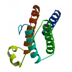 The structure of leptin, a metabolically important hormone. Image courtesy of the PDB Protein Data Bank.