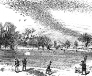 This 1875 drawing shows flocks of passenger pigeons hunted down in the 19th century.