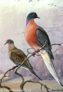 Passenger pigeons became extinct in 1914. Little research had been carried out about their habits then, so modern scientists are still dealing with a lack of information about the birds.