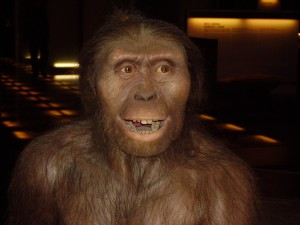 Fossilized remains of Australopithecus afarensis, the hominin species that includes the famous Lucy specimen, have been dated to be over three million old. This forensic facial reconstruction provides a glimpse of how Au. afarensis might have appeared as he roamed Eastern Africa during the Mid-Pliocene. (Image courtesy of Wikimedia Commons.)