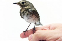 Connecting the Address Book to the Family Tree for the Earth's Vertebrates