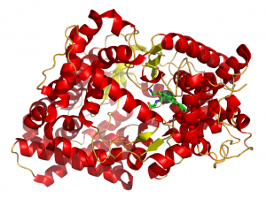 Neprilysin is an enzyme that degrades certain peptides, including two peptide hormones that decrease blood pressure. Sacubitril, a component of LCZ696, inhibits neprilysin to restore the function of these hormones. Image courtesy of Wikipedia.
