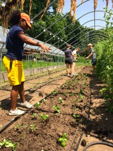 Yetunde Meroe '16 sprinkles seeds in the soil at the Yale Farm. Soil science was a major theme of her summer work.