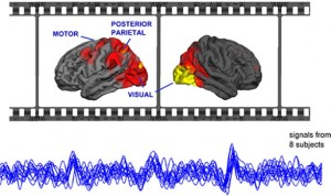 People who watched the silent film At Land produced similar patterns of brain signals. These signals originated from the same brain regions, such as the motor, posterior parietal, and visual cortices. (Image Courtesy of ScienceDaily)