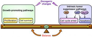 A diagram represents the two-signal hypothesis by which cancer develops. Both activation of an oncogene and inactivation of a tumor suppressor gene are required. Image courtesy of InTechOpen.