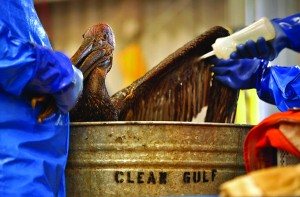 Oil spills affect wildlife by contaminating their natural environment and food sources. Image courtesy of the Los Angeles Times.