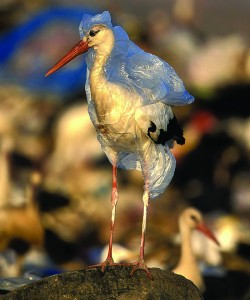Plastic bags are often criticized for polluting the environment, and especially the ocean. Some creatures are more susceptible than others. Image courtesy of E Colur.