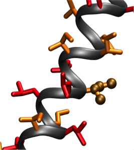The molecular structure of the synthesized LIL proteins. The proteins were in an alpha helix configuration. Image courtesy of the DiMaio laboratory.