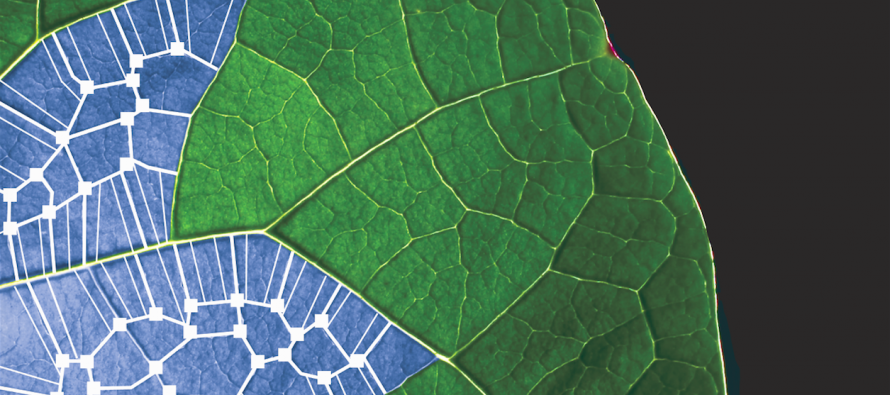 Nature's Blueprint: Solar cells inspired by plant cells