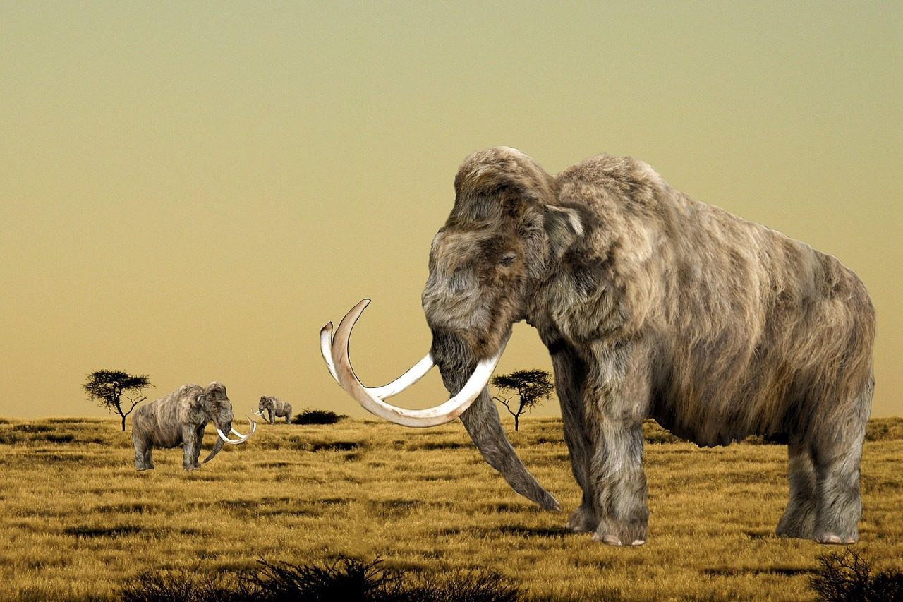 Book Review: How to Clone a Mammoth