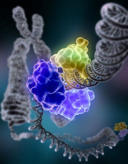 Former Yale Radiobiologist Co-awarded Nobel Prize in Chemistry