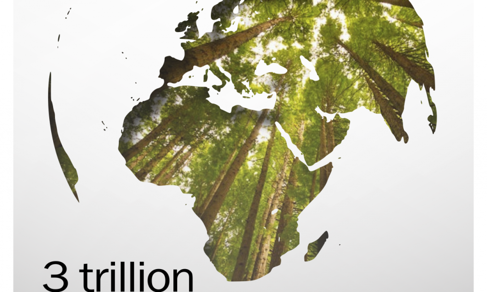 Trillions of Trees: Yale study finds three trillion trees on Earth