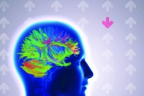 Battling OCD in Real-Time: Live brain imaging helps patients attack anxiety at the source