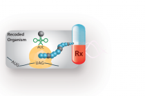 Cracking the Code for Multisite Synthetic Amino Acid Incorporation