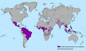 In May 2015, the Zika virus was reported in the Western Hemisphere for the first time. Image courtesy of Wikimedia Commons.