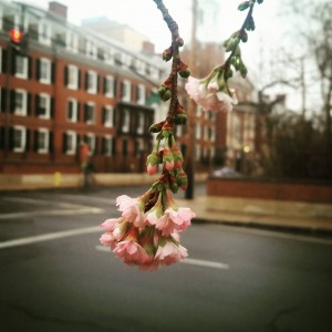 Even in December, flowers could be seen blooming on Yale's campus. Image courtesy of Arvin Kakekhani.