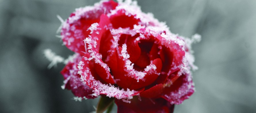 Q&A: Seasons Turned Upside Down, What is the El Niño Effect?