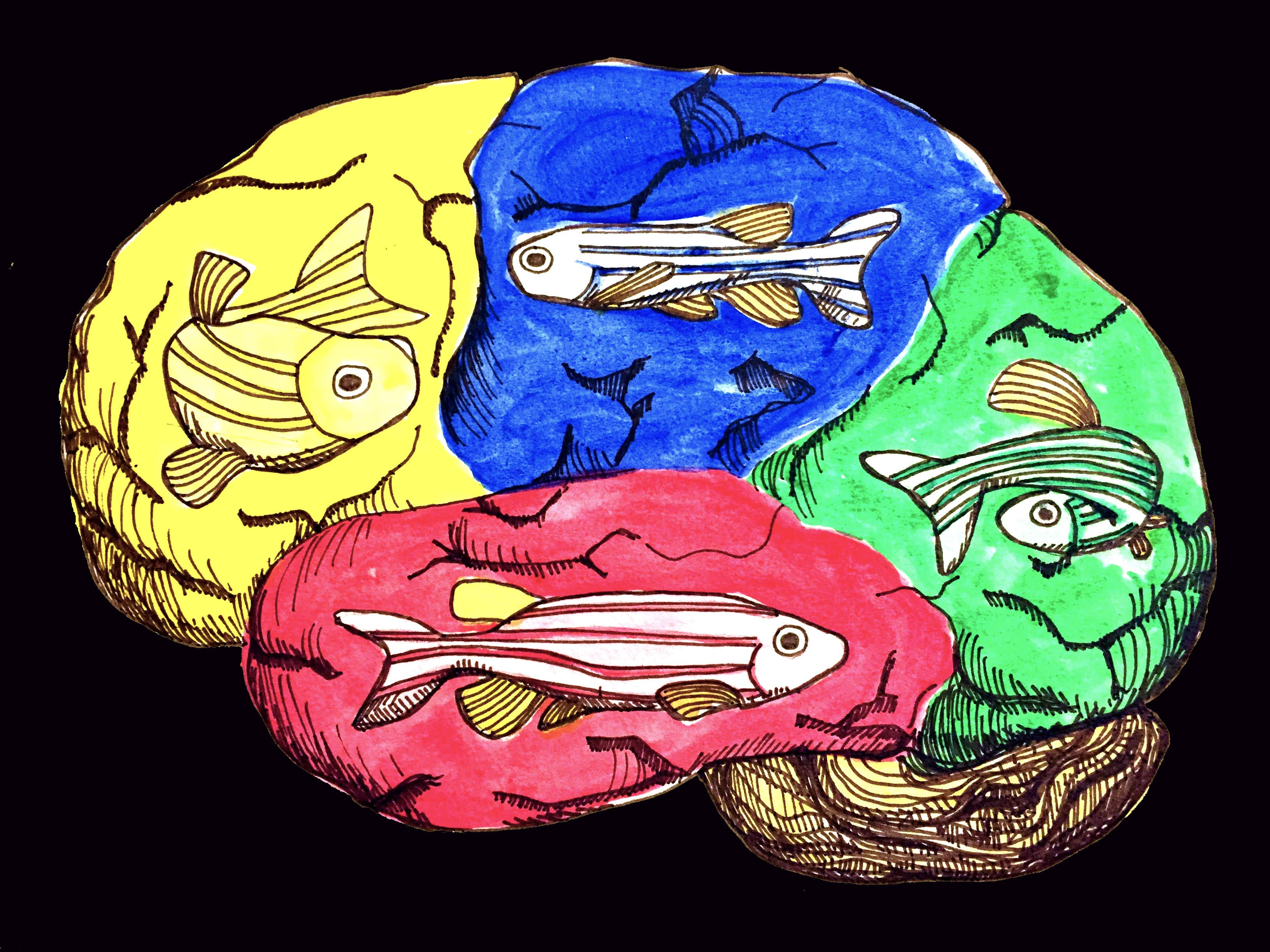Mystery Gene Uncovered In Autism >> Something Fishy About Estrogen Zebrafish Model Offers New