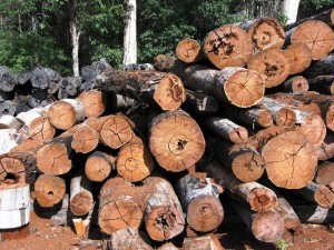 Natural resources are currently valued primarily by their final commercial product, such as trees being priced according to their timber. Image courtesy of Wikipedia Commons