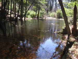 A small pond in Connecticut releases disproportional amounts of carbon from terrestrial surroundings into the atmosphere. Image courtesy of Meredith Holgerson.