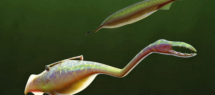 Perplexing Fossils and Peculiar Forms: Mapping the Tully Monster onto the Tree of Life