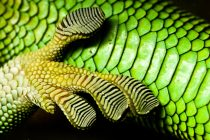 Deco Gecko: A Clean Touch to Art