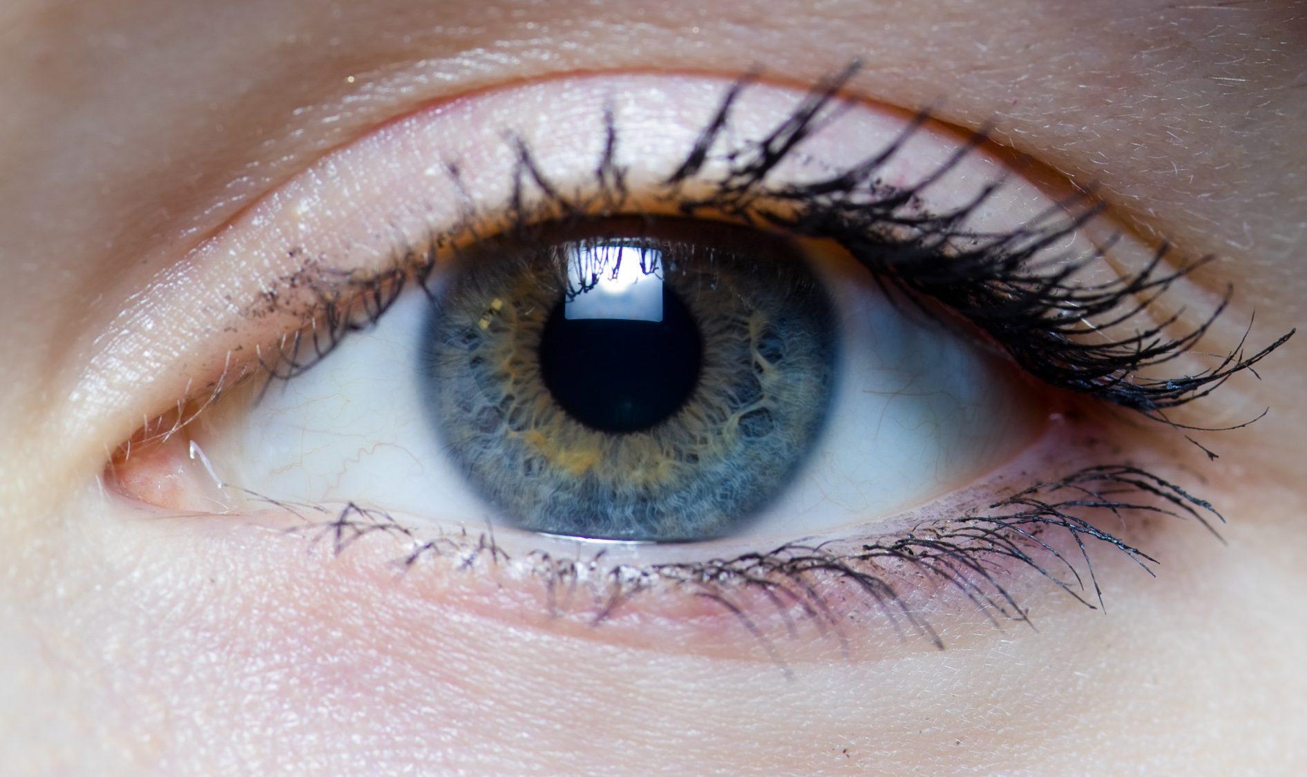 Insight into Eyesight: Reawakening Retinal Stem Cells