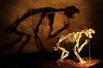 Skeletons in the Ice Age Closet