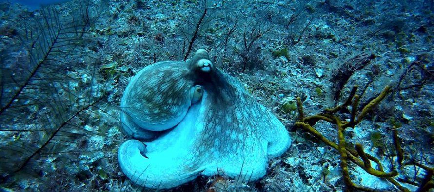 Plastic Preys on Deep-Sea Organisms