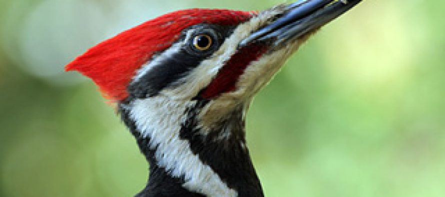 What Woodpeckers Can Teach Us