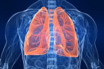 Growing a Lung in Culture: New bioreactor system allows crucial oxygen exchange.