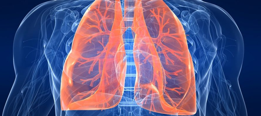 Making New Lungs: An important development in tissue-engineering brings hope for better treatment of respiratory and vascular diseases